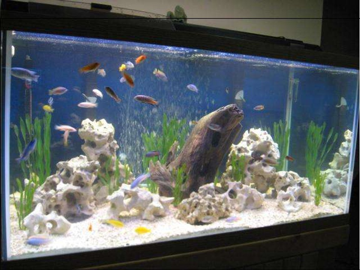 120 gallons freshwater fish tank (mostly fish and non-living decorations) - 120gal. Lake Malawi !!!!!!
