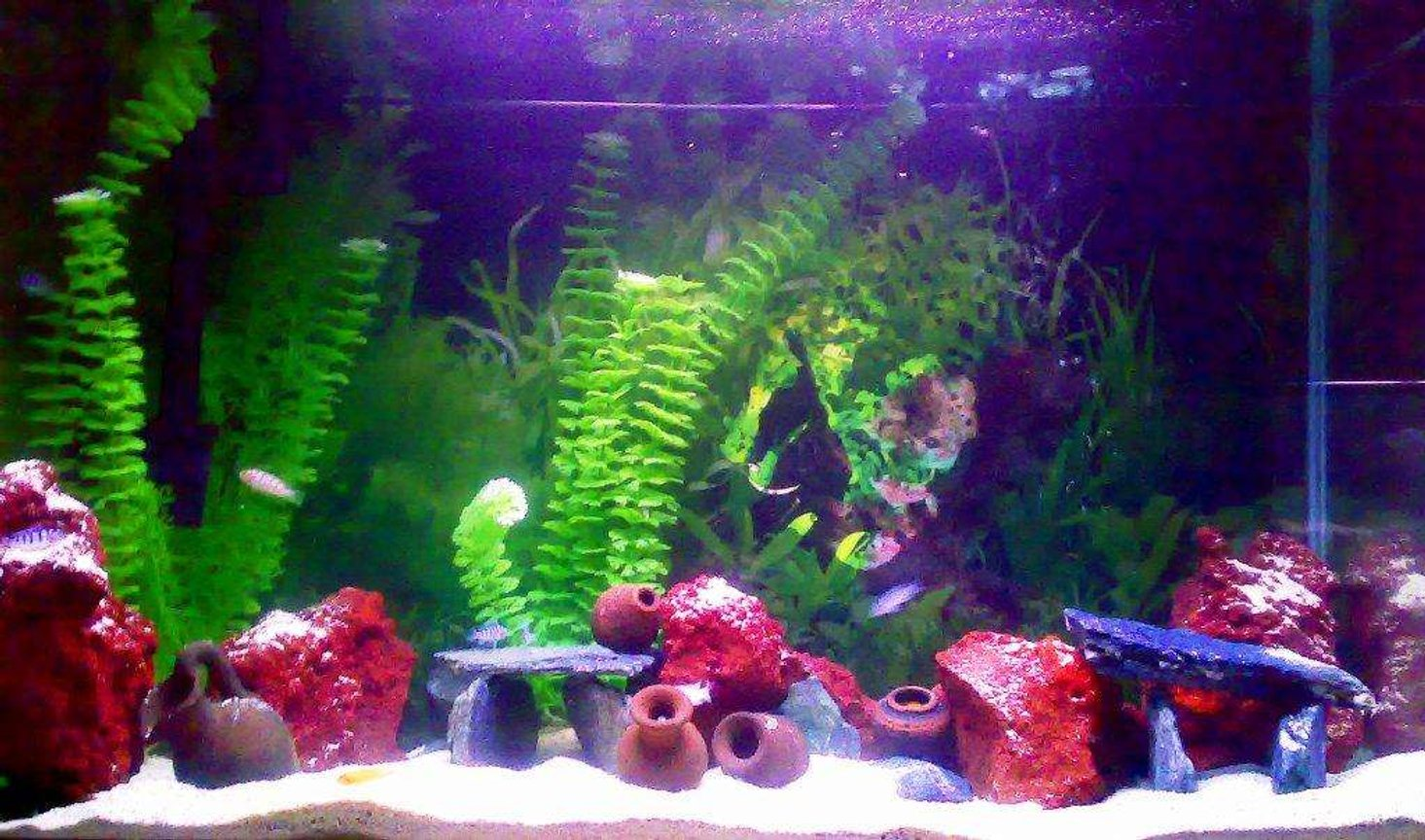 30 gallons freshwater fish tank (mostly fish and non-living decorations) - My new cichlid tank!