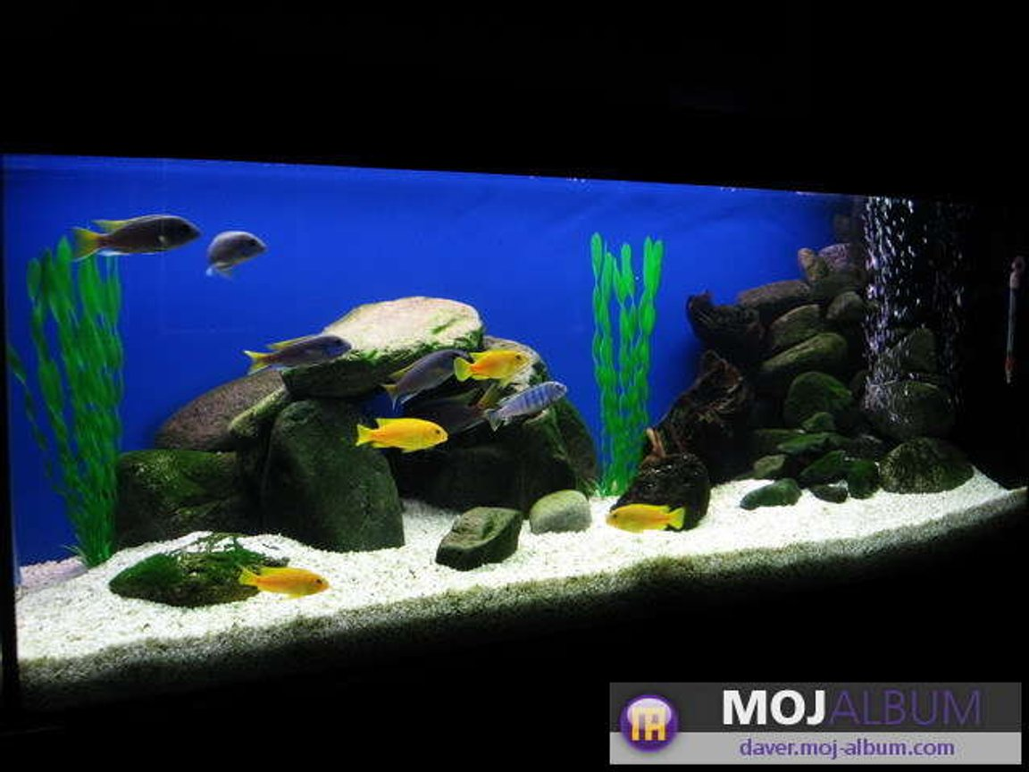 42 gallons freshwater fish tank (mostly fish and non-living decorations) - ACEI and SAULOSI