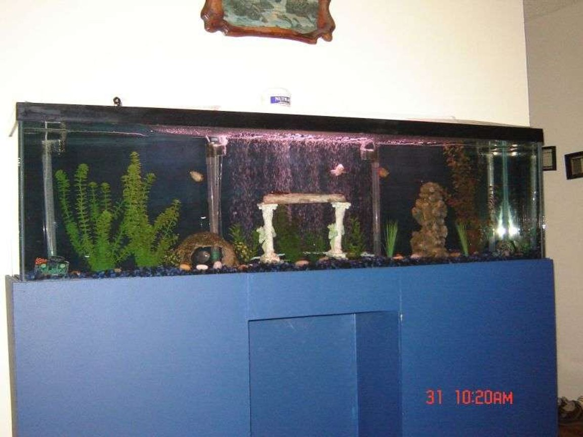 88 gallons freshwater fish tank (mostly fish and non-living decorations) - my tank