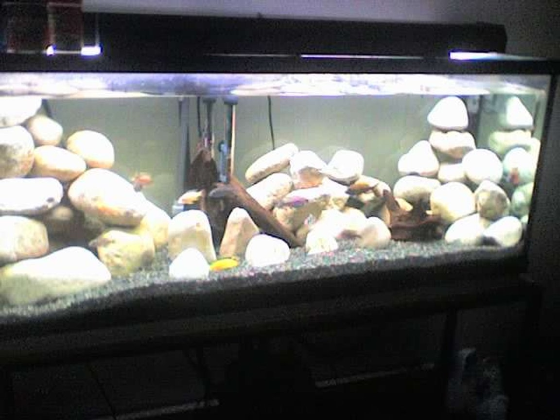65 gallons freshwater fish tank (mostly fish and non-living decorations) - umm off my phone so dnt hate to much for the bad quality
