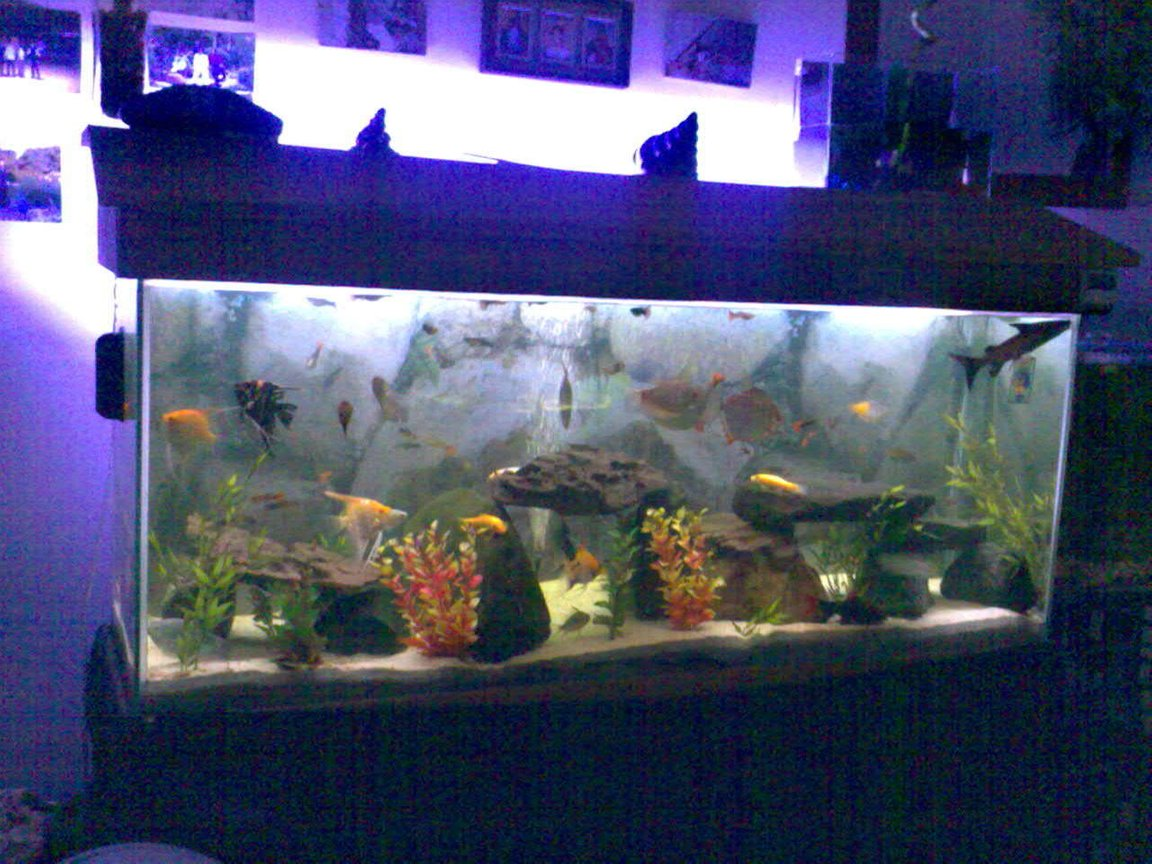 52 gallons freshwater fish tank (mostly fish and non-living decorations) - not bad for a first tank