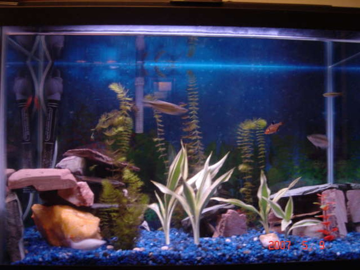 50 gallons freshwater fish tank (mostly fish and non-living decorations) - this is my fish tank