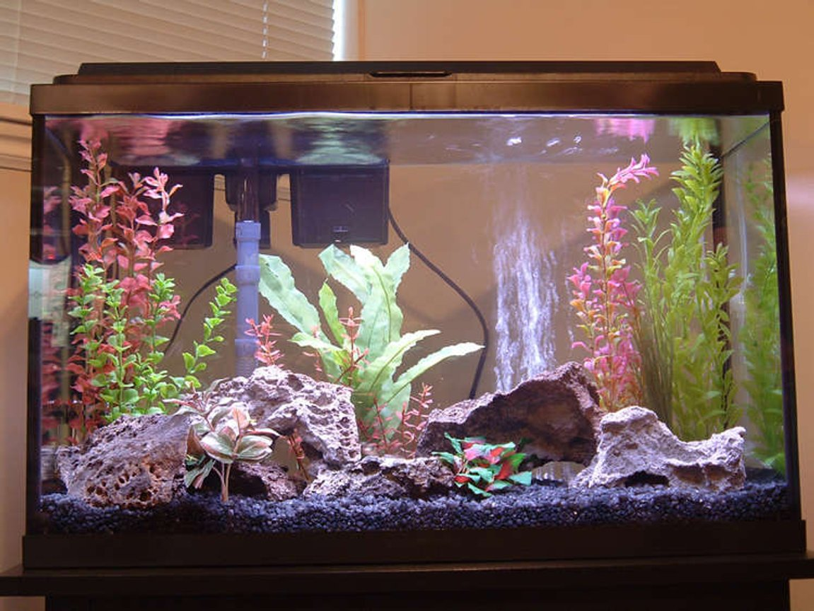 29 gallons freshwater fish tank (mostly fish and non-living decorations) - My first freshwater fish tank! I hope you like it. I sure enjoyed putting it together.