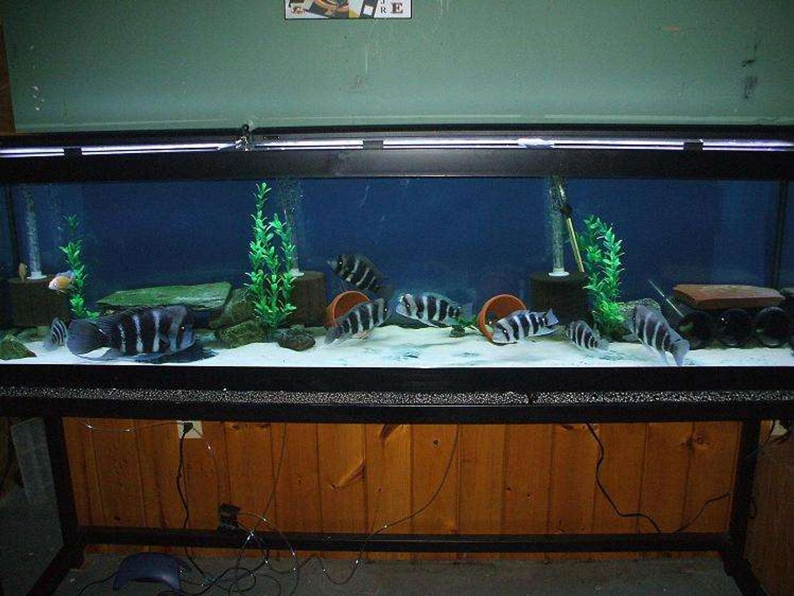 100 gallons freshwater fish tank (mostly fish and non-living decorations) - Frontos Burundi