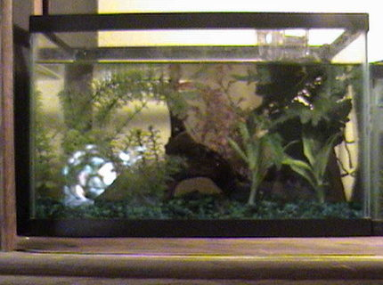 500 gallons freshwater fish tank (mostly fish and non-living decorations) - AN EMPTY ENDLER