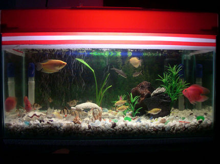 67 gallons freshwater fish tank (mostly fish and non-living decorations) - the picture of my 18 gallon tank