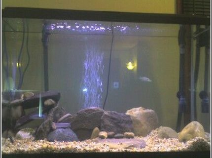 45 gallons freshwater fish tank (mostly fish and non-living decorations) - another angle