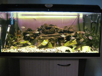 45 gallons freshwater fish tank (mostly fish and non-living decorations) - FFA Community Tank