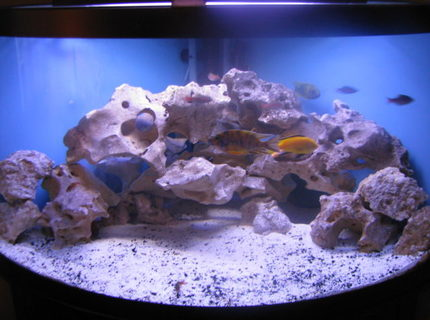 92 gallons freshwater fish tank (mostly fish and non-living decorations) - My 92 gallon Malawi cichlid tank