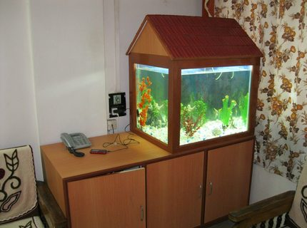 58 gallons freshwater fish tank (mostly fish and non-living decorations) - My fish tank
