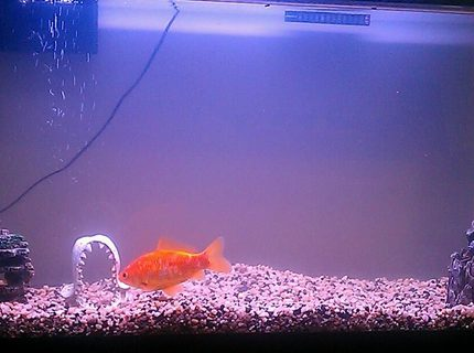 38 gallons freshwater fish tank (mostly fish and non-living decorations) - My tank after the sick fish