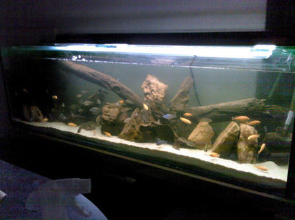 Rated #20: 50 Gallons Freshwater Fish Tank - This is the front of the tank