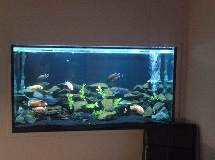 Rated #17: 84 Gallons Freshwater Fish Tank - my tank