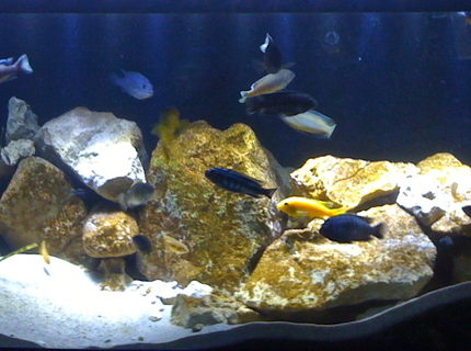 Rated #12: 75 Gallons Freshwater Fish Tank - 75 Gallon Mbuna Reef