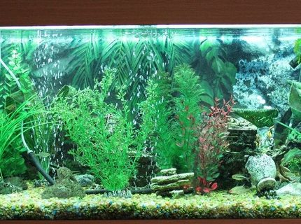 50 gallons freshwater fish tank (mostly fish and non-living decorations) - Freshwater tank, 180 Liter, no live plants.