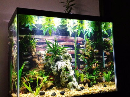 "54 gallons freshwater fish tank (mostly fish and non-living decorations) - 55 tall ""river"" themed tank"