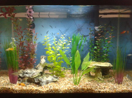 20 gallons freshwater fish tank (mostly fish and non-living decorations) - My 20 Gallon