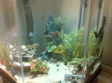 44 gallons freshwater fish tank (mostly fish and non-living decorations) - 44 gallon corner tank