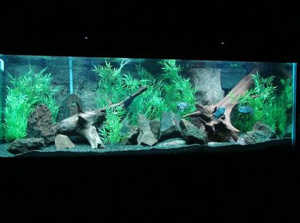 200 gallons freshwater fish tank (mostly fish and non-living decorations) - 200 Gallon Boyu tank 