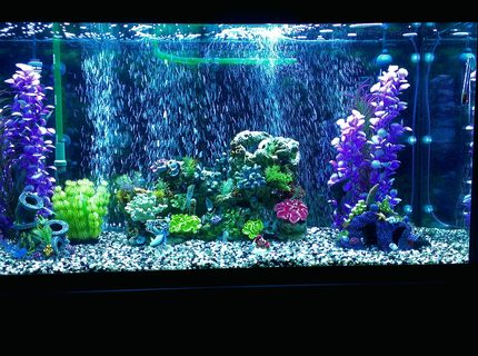 90 gallons freshwater fish tank (mostly fish and non-living decorations) - Updated photo.
