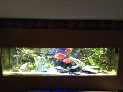 210 gallons freshwater fish tank (mostly fish and non-living decorations) - 210 tank re-arranged
