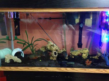 90 gallons freshwater fish tank (mostly fish and non-living decorations) - Daddy's Aquarium. 90 G
