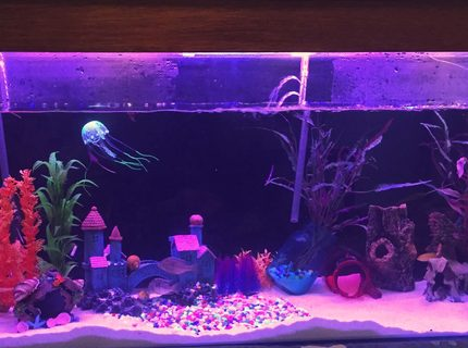 58 gallons freshwater fish tank (mostly fish and non-living decorations) - 4ft tank spooky one end fairy like other end