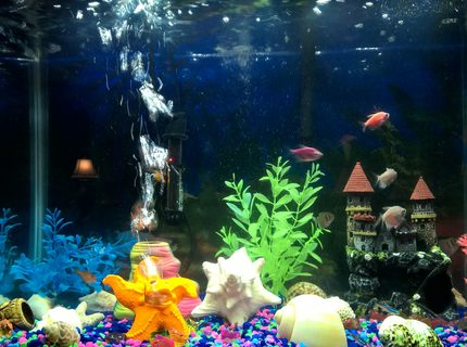 20 gallons freshwater fish tank (mostly fish and non-living decorations) - Moment in time