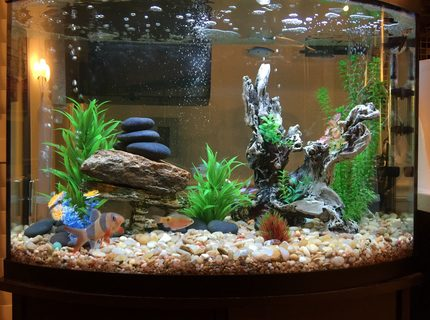 36 gallons freshwater fish tank (mostly fish and non-living decorations) - Quick build freshwater