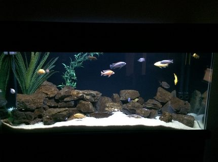 "170 gallons freshwater fish tank (mostly fish and non-living decorations) - Malawi Desert ""Rock & Sand"""