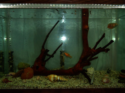 20 gallons freshwater fish tank (mostly fish and non-living decorations) - My aquarium. This is better than it's photo