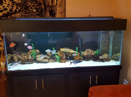 180 gallons freshwater fish tank (mostly fish and non-living decorations) - 180g freshwater display tank