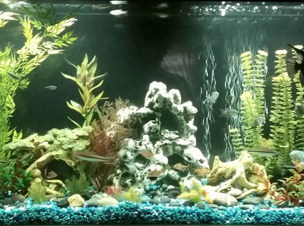 65 gallons freshwater fish tank (mostly fish and non-living decorations) - 60 gallon freshwater tank with fake plants.