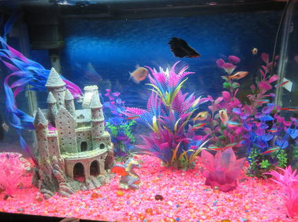 20 gallons freshwater fish tank (mostly fish and non-living decorations) - This is a 20 gallon tank, 12 x 24, whisper filter, newer heater (needs no adjustment), fluorescent light, pink gravel, castle, dragon. pink crystal, plastic plants (pink and purple)