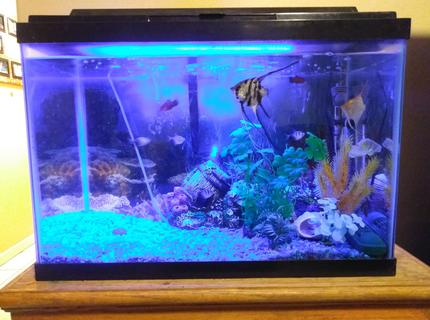 20 gallons freshwater fish tank (mostly fish and non-living decorations) - 01032018 tank update