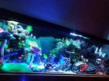 250 gallons freshwater fish tank (mostly fish and non-living decorations) - This is my Fantasy Themed Fish Tank (zoom into the pic to see or look at my additional pics) - i handcrafted custom made all the decor. This unique aquarium has it all with air animated moving bridges, underwater sand waterfalls, realistic hot lava rivers and pits, different colored lighted sections that can be changed to any possible color or multiple mode settings with a simple pushing of a button using your smartphone, even has realistic lightning above the evil castle.  Fairy side has a sun that changes colors along with the sky to look like a beautiful sunset.