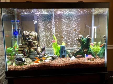 65 gallons freshwater fish tank (mostly fish and non-living decorations) - 65 gallon Aqueon freshwater tank