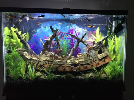 45 gallons freshwater fish tank (mostly fish and non-living decorations) - Ship Wreck