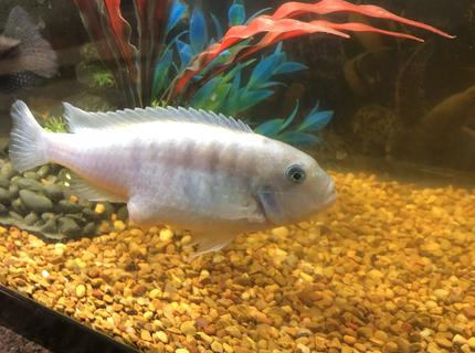 30 gallons freshwater fish tank (mostly fish and non-living decorations) - N