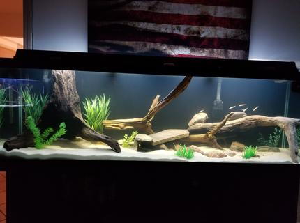 250 gallons freshwater fish tank (mostly fish and non-living decorations) - Monsters