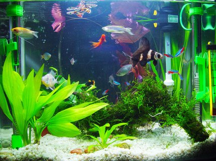 540 gallons freshwater fish tank (mostly fish and non-living decorations) - my aquarium