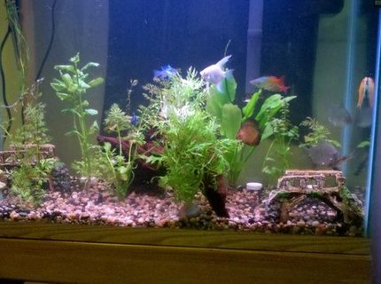 39 gallons freshwater fish tank (mostly fish and non-living decorations) - 39 Gal