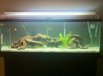 60 gallons freshwater fish tank (mostly fish and non-living decorations) - my 60 gallon cichlid tank