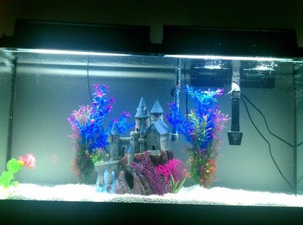 60 gallons freshwater fish tank (mostly fish and non-living decorations)