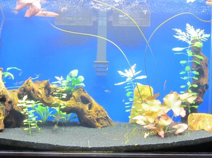 50 gallons freshwater fish tank (mostly fish and non-living decorations) - Planted 50 Gallon