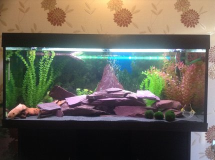 53 gallons freshwater fish tank (mostly fish and non-living decorations) - My first ever fish tank with Purple slate feature with turtle float