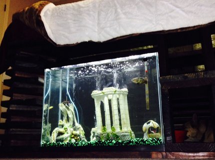 "37 gallons freshwater fish tank (mostly fish and non-living decorations) - 37 gallon tank built in under my bed where my dog gets to look at the fish while he is in his ""room"""