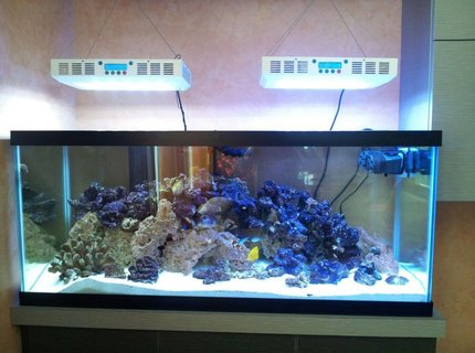 2 gallons freshwater fish tank (mostly fish and non-living decorations)