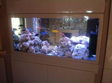 70 gallons freshwater fish tank (mostly fish and non-living decorations) - cichlid tank